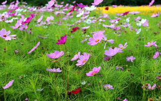 ...俨然一片花的海洋.花海石林间,徜徉着多彩的馨香.相比于其他...