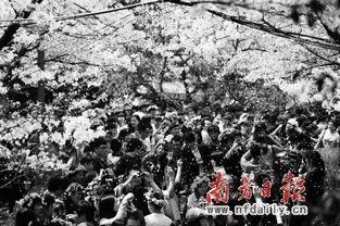 北京玉渊潭公园樱花节游记
