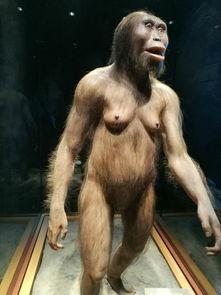 —300万年前类人猿遗骨复原的