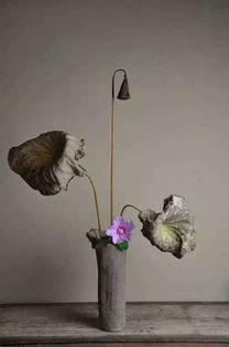 朗诵 做一朵随遇而安的花