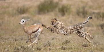 博狗bf88-摄影师环球拍摄野生动物日常生活瞬间