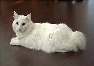 如何处理猫身上的寄生虫?