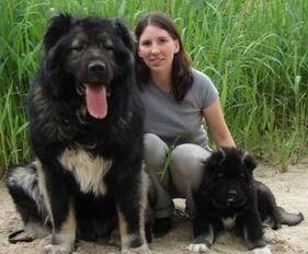 村上里沙 和2只狗番号-防护犬,用来保卫屋子,和牧羊犬的区别在于防护犬具有对陌生人极其...