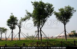 东戴河 海边绿化