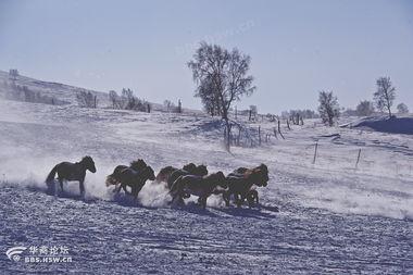 天空飘着一片雪】天空飘着六月的雪-所以元旦春节前后前往都是赏雪和拍摄雪景最佳的时间.冬季千里冰封...