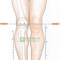 膝眼的准确位置图 膝眼穴位位置图 咔咔养生网