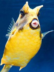 ...萌哒鱼 来自黑彼岸花的图片分享 堆糖