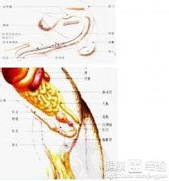 根据你所说可能是尿道结石和膀胱炎症造成的,尿道结石