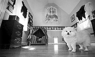村上里沙 和2只狗番号-据英国媒体1日报道,美国洛杉矶市一位富婆花费2万美元(约合13.6万...