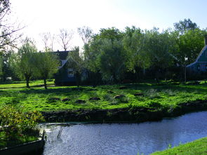 荷兰农村的田园风光 支持新手论坛发展