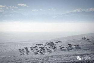 后来的雪-雪后的胡杨林   雪后的村落   如今花钱也买不到的奢侈品越来越多,比...