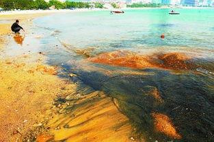 青岛第三海水浴场沙滩西侧有许多黑沙随海水流动
