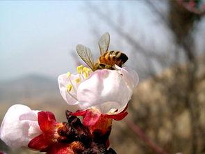描写鲜花的诗句-关于桃花的诗词