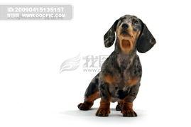 小狗图片小狗的图片可爱的小狗图片卡通小狗图片小狗宠物动物高清...
