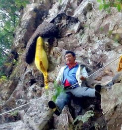 依靠无量山草医世家传授的猎蜂与采药技术,与盘旋在峭壁的岩蜂展开...