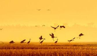 候鸟-动物大盘点 完爆人类的动物 超能力