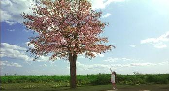 花水木 又见纯爱