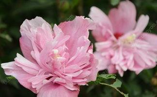 夏天开的花有哪些 什么花在夏天开放
