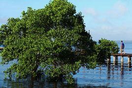 恍旷-青山绿水   游走在乡村之间,欣赏着小桥流水,加上徐徐而来的清风,...