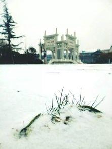 薄薄的,白皑皑一片,如敷上一层... 天空飘着柔软的小雪,安静的连水...