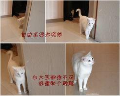...出门走走,不带猫绳的自由