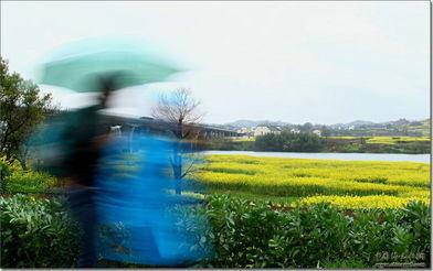新安江畔,雨中飘荡的回忆