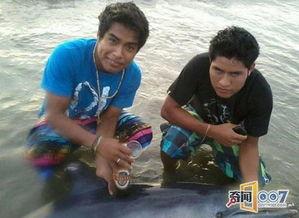 海豚在海滩上搁浅,少年的做法太不道德了