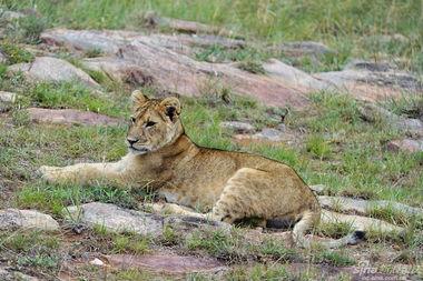 ...的大陆,生命的起源,动物天堂.特约摄影师:高帅-沿着肯尼亚河畔...