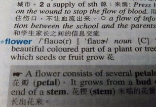 flower这个单词的发音中有w吗