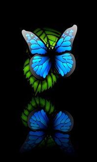 蝴蝶黑色背景