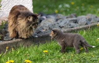 孟加拉狐-丧母小狐狸与主人家动物结成好伙伴