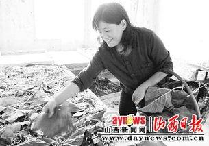 垣曲县1万余名农村妇女投入植桑养蚕