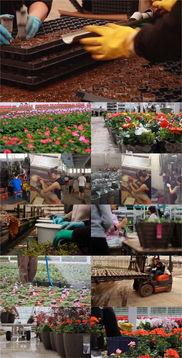 鲜花花莽种植基地视频素材图片设计 高清其他模板下载 44.72MB M...