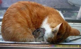 看看老鼠调戏猫搞笑图片