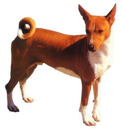 各种名犬名字加图片图片大全 哈士奇是原始的古老犬种,名字
