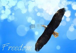 自由飞翔的老鹰高清图片免费下载 jpg格式 3404像素 编号21826507 ...