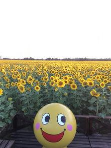 向阳花的爱情