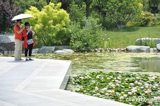 高清 西安植物园新园区迎来首次夏季水生植物展 2