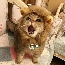 表情 猫咪凶 超凶,逗比拯救世界 表情