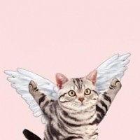 ...情 最新好看小萌猫头像 超可爱喵星人 可爱头像 表情