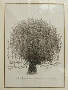 科学画作品-植物科学绘画作品展 在版纳植物园展出