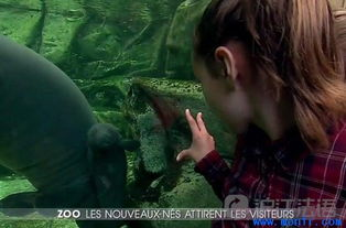 法国新闻直播 动物园新生的小动物萌死人 21 mar 2017