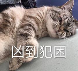 超凶Loki猫表情包高清去水印版 超凶Loki猫搞笑表情包V1.0最新版 52...