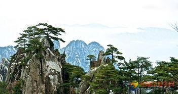 【形容山的词语】形容山的词语二字-描写黄山松导游词