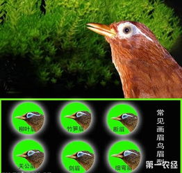 画眉鸟冬天怎么溜
