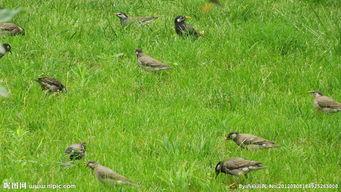 投喂野生鸟类的方法技巧和注意事项