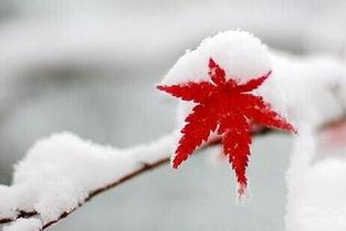 ...大雪节气的民间谚语