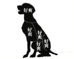 网友@凌薇思语问-喵星人 汪星人 真的大不同 狗狗随便摸