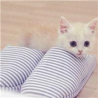 表情 可爱小奶猫头像大全 萌翻天的小猫咪 可爱头像 表情