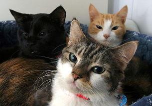如何防止猫染上寄生虫